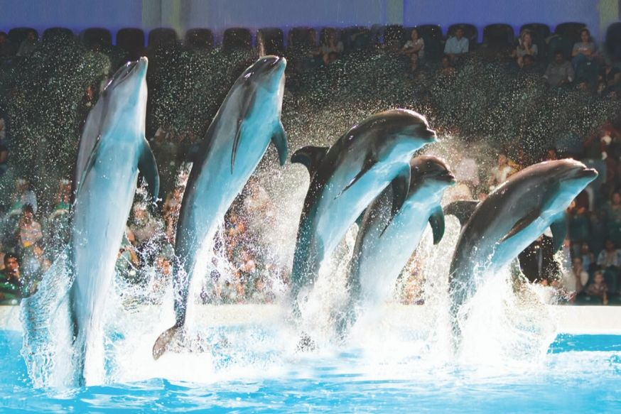 Dolphin & Seal Show