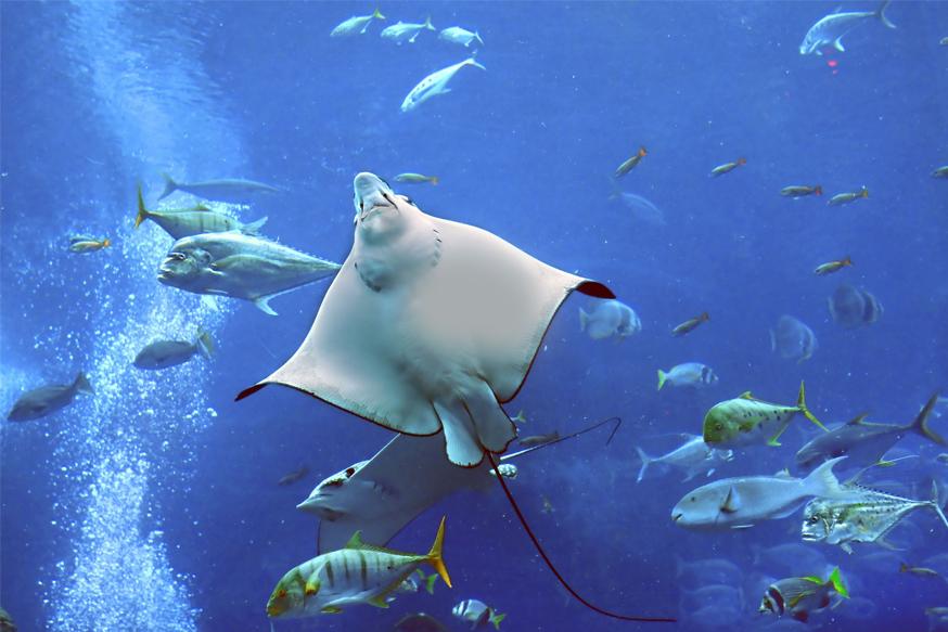 Dubai Aquarium and Underwater Zoo Tickets