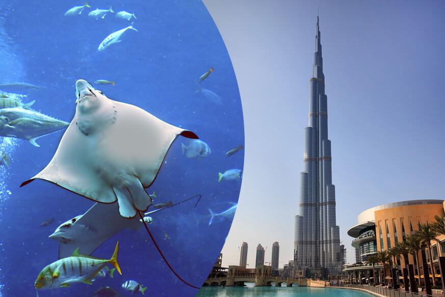 At the Top and Dubai Aquarium Combo Ticket