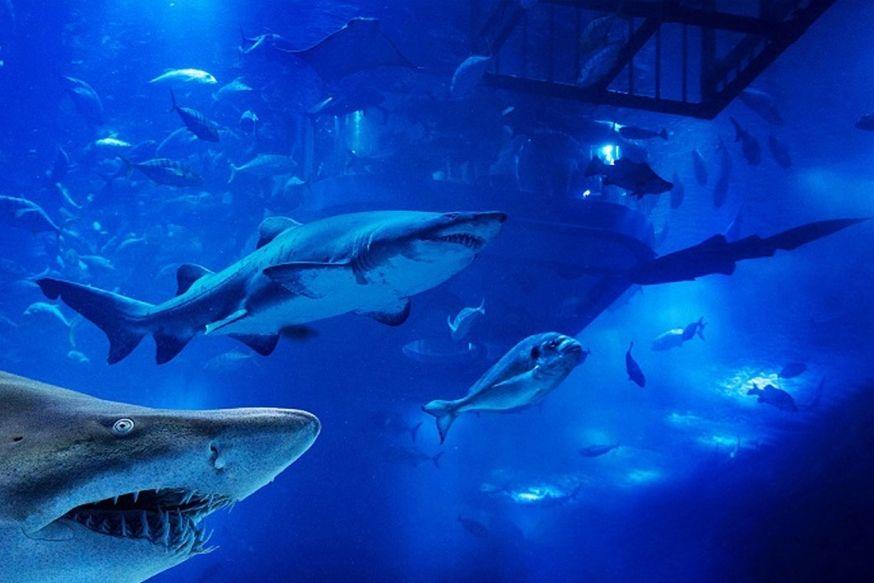 Dubai Aquarium Explorer